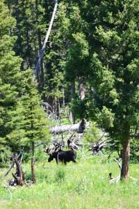 Yellowstone31
